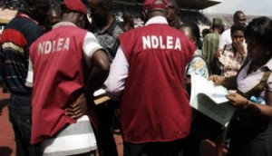A 56-year-old man has been caught with marijuana just two months after he got released from prison.  The National Drug Law Enforcement Agency (NDLEA), Niger State Command, has arrested one suspect with 1,072 kg of substances suspected to be marijuana in Mokwa Local Government Area of the state.