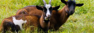 A woman identified as Sadiat Jimoh has been arraigned and sentenced to six months imprisonment for stealing a goat.  A magistrates' court sitting in Osogbo, Os