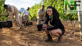 South Africa's wineries have had a very difficult past 12 months, with bans on both domestic alcohol sales and exports. Yet the industry is now hopeful of a brighter future.  Winemaker Kiara